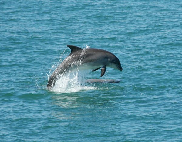 natural_mystic_travel_dolphin