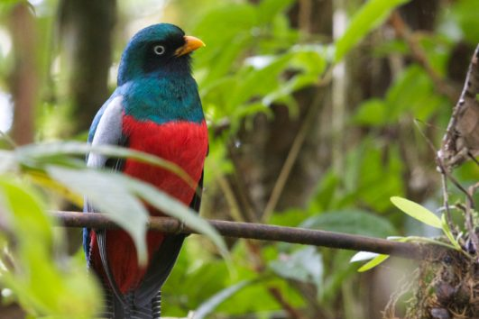 natural_mystic_travel_trogon