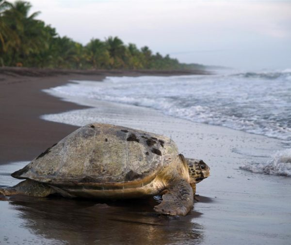 natural-mystic-travel-sea-turtle